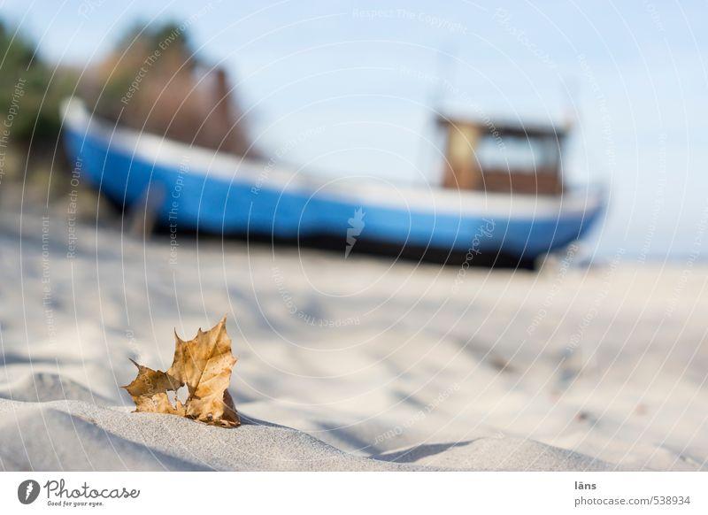 flotsam and jetsam Beach Leaf ship Fishing boat Autumn Baltic Sea fishing
