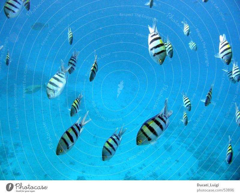 nice guys Dive Snorkeling Underwater photo Shoal of fish Serene Fish red sea Deep Be confident Swimming & Bathing