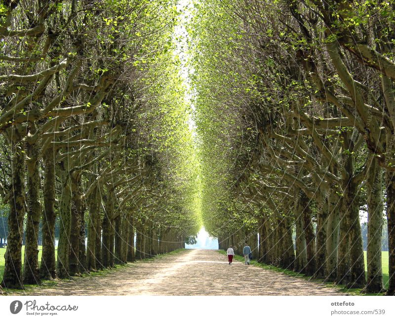 Human being Tree Calm Relaxation Spring Couple Lanes & trails Park In pairs Paris France Avenue Street