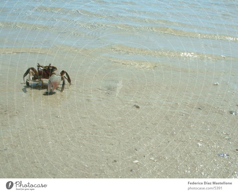 crayfish Animal Patagonia Sand Shellfish