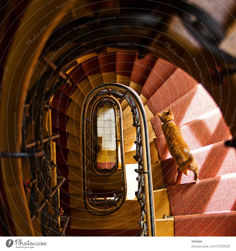 follow me downstairs Athletic Fitness Adventure Flat (apartment) House (Residential Structure) Interior design Staircase (Hallway) Track and Field Architecture