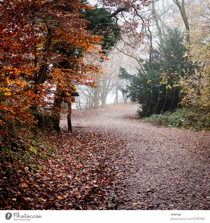 Nature Beautiful Plant Tree Landscape Leaf Forest Environment Autumn Lanes & trails Moody Leisure and hobbies Fog Wild Climate Hiking