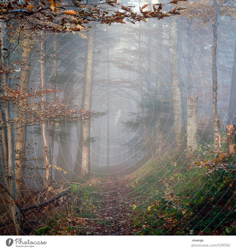 in Leisure and hobbies Trip Adventure Environment Nature Landscape Autumn Climate Climate change Fog Forest Mixed forest Leaf Lanes & trails Faded Simple