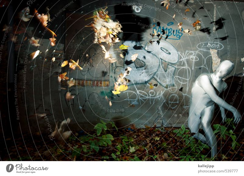 autumn is coming Human being Masculine Body 1 Environment Nature Autumn Climate Weather Gale Forest Town Facade Graffiti Throw Leaf Political movements