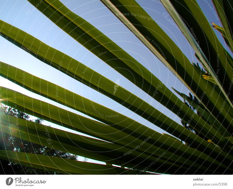 Palm Perspective Palm tree Green Summer Style Nature Sun