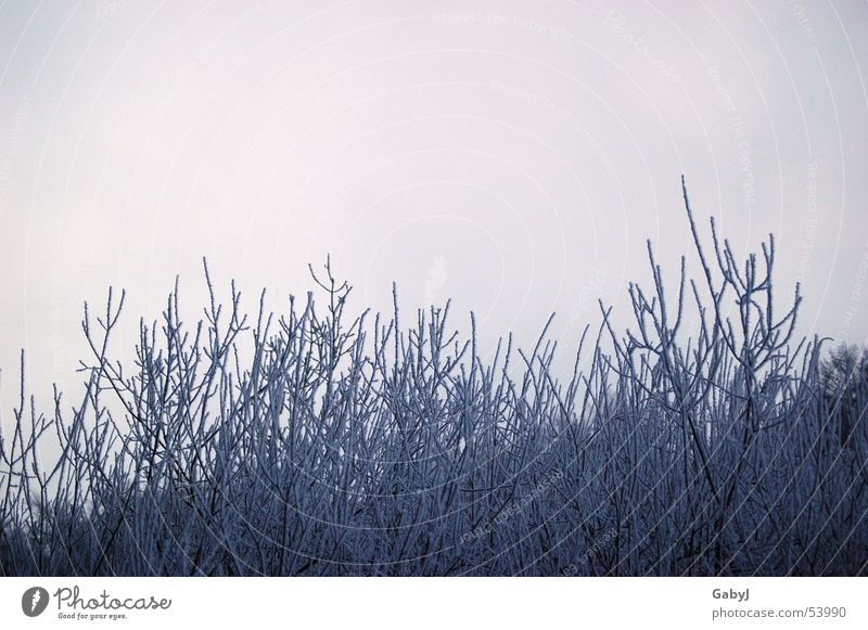 frosted Winter Light Ice crystal Cold Bushes Branchage Sky Express train Nature Hoar frost Frost Plant Wait waiting