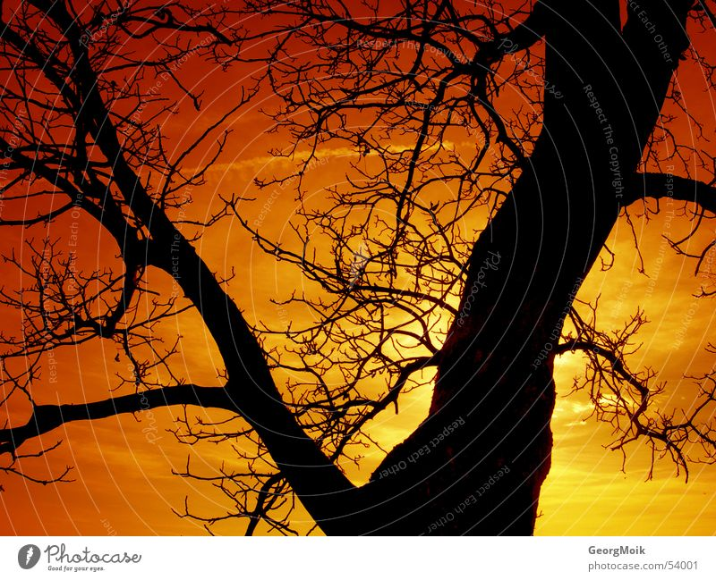 timeless Tree Winter Physics Colouring Sublime Redness Sunset Yellow Amber Black Dark Color gradient Progress Silhouette Exterior shot Warmth Old lordly Dusk