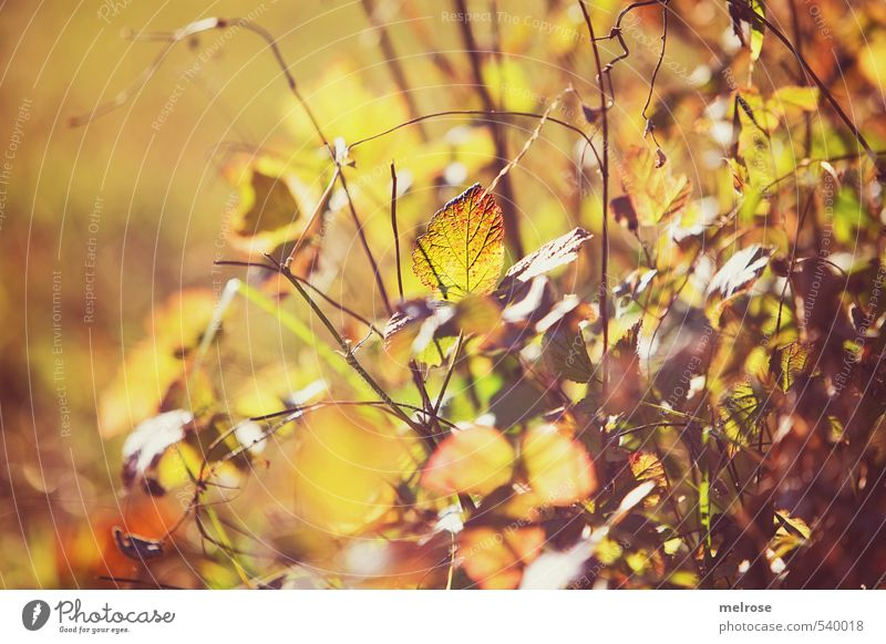 Nature Green Relaxation Calm Leaf Forest Yellow Autumn Dream Moody Brown Leisure and hobbies Orange Field Bushes Growth