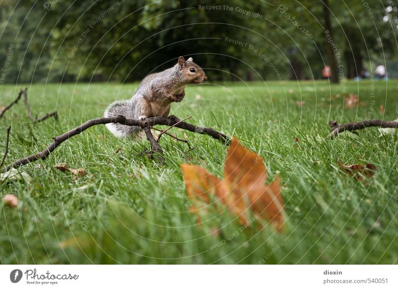 Nature Plant Tree Leaf Animal Environment Meadow Grass Small Park Sit Wild animal Cute Branch London England
