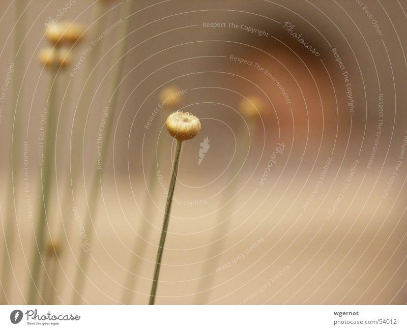 Flower Blossom Grass Bud