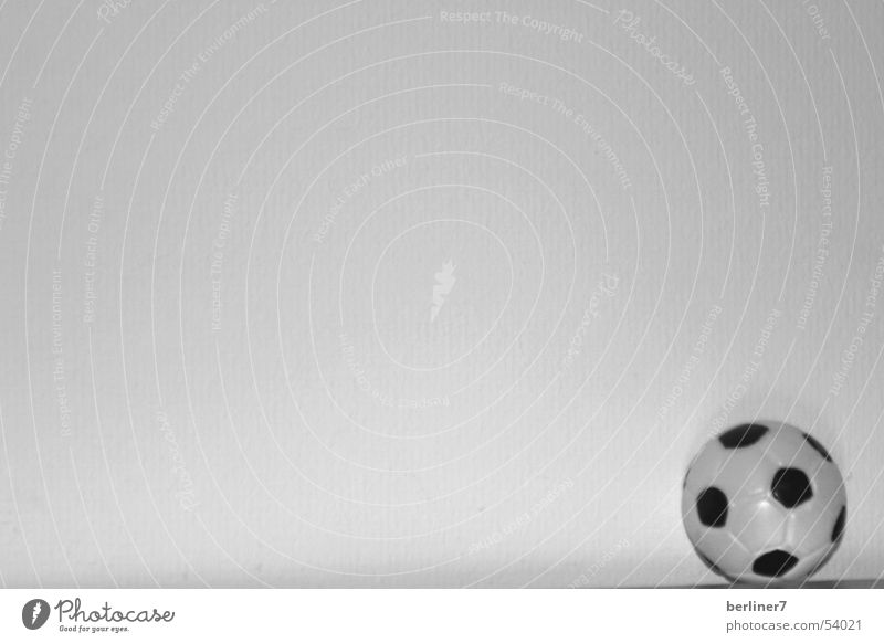 he just wants to play... Leather Black White Ball Contrast Neutral Background Bright background 1 Round Foot ball Copy Space top Copy Space left