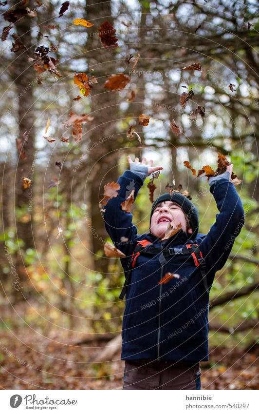 leaf rush Human being Child Boy (child) Infancy 1 3 - 8 years Nature Autumn Leaf Forest Jacket Cap Movement Playing Throw Brash Happiness Happy Blue Brown