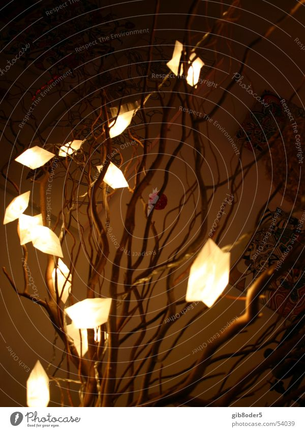 lux Light Night Dark Plant Progress Grief Bright Pasture Joy Liberate Freedom