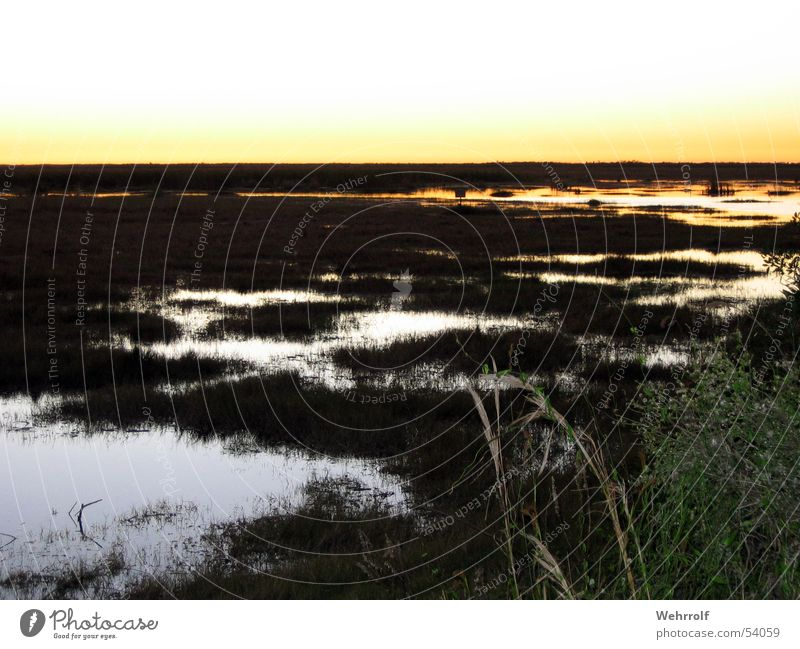 Sunset Everglades Florida Marsh Grass Pond USA evergaldes Water swomp