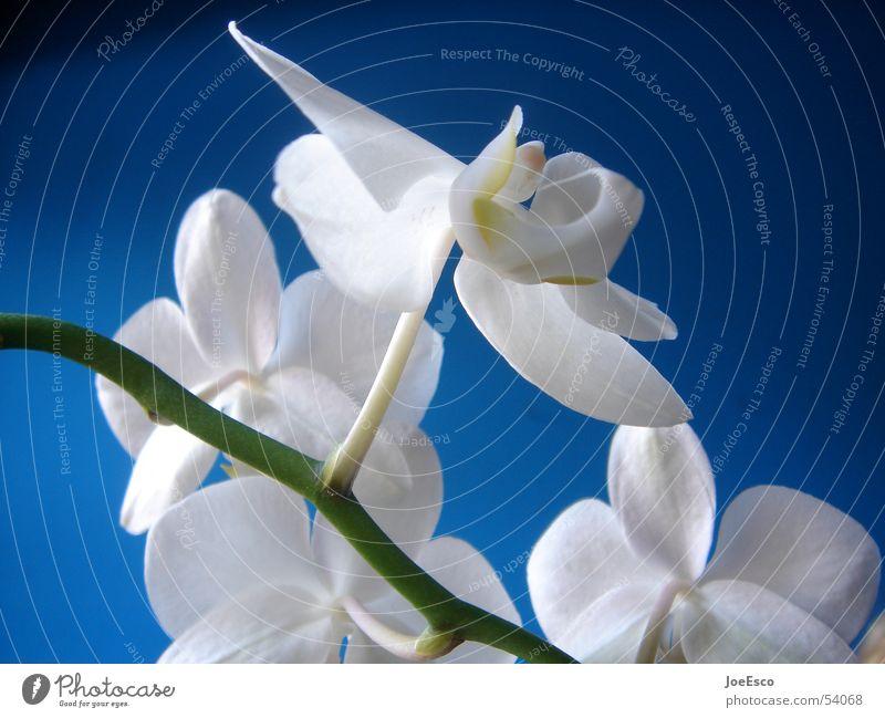 Nature Flower Blue Summer Jump Style Blossom Spring Fresh Cool (slang) Orchid Progress Florist Merchant Floristry Flower shop