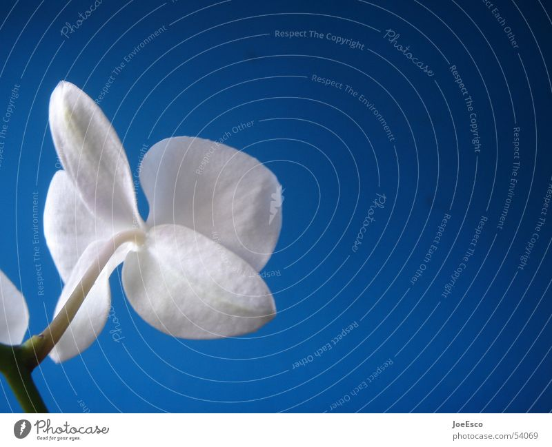 fresh orchid 03 Style Summer Nature Plant Spring Flower Orchid Blossom Exotic Jump Cool (slang) Fresh Blue Beautiful Progress Floristry Flower shop
