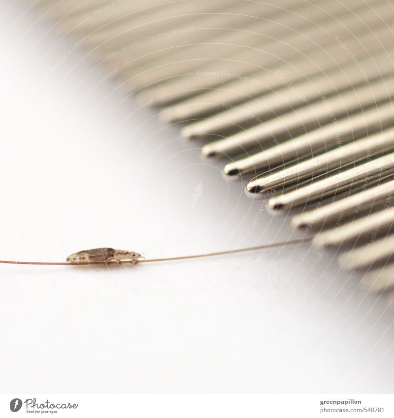 What kind of louse have you been up to? Personal hygiene Body Hair and hairstyles Healthy Health care Medical treatment Illness Parenting Kindergarten Child