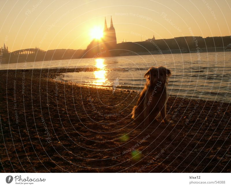 Sunset on the banks of the Rhine Dog Cologne Winter Dome Water Coast