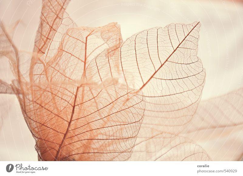 delicate Nature Plant Leaf Thin Esthetic Kitsch Ease Delicate Rachis Structures and shapes Arrangement Pattern Line Transparent Translucent Elegant Spring Pink