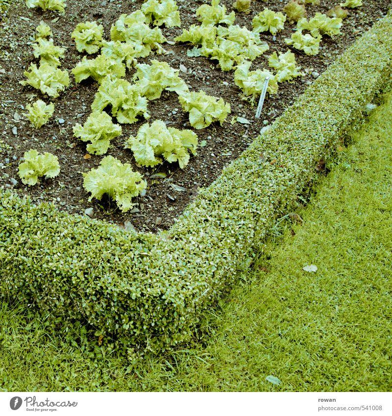 Green Plant Healthy Garden Nutrition Diet Gardening Foliage plant Agricultural crop Lettuce Checkmark Gardener Market garden