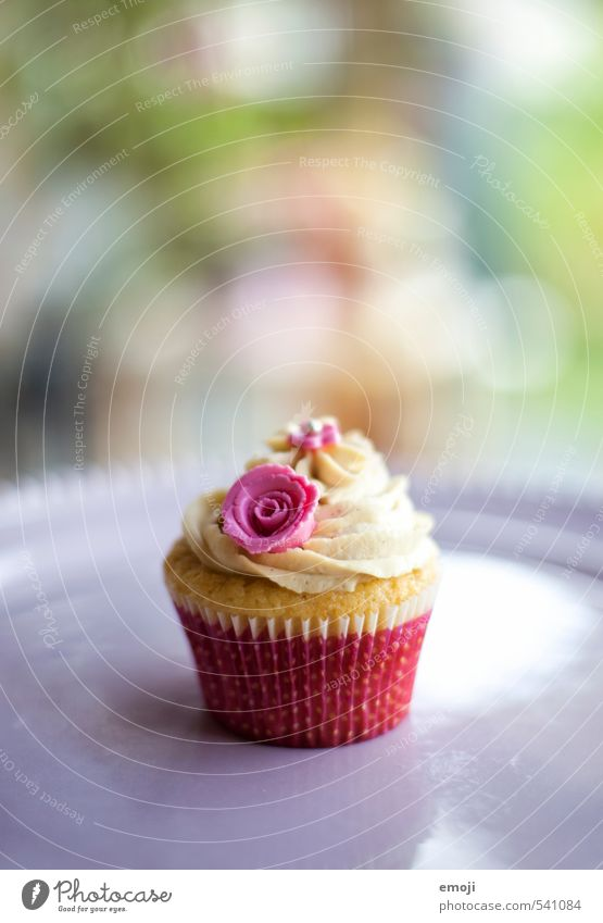 sweet Cake Dessert Candy Nutrition Picnic Slow food Finger food Delicious Sweet Pink Cupcake Colour photo Exterior shot Deserted Copy Space top Day