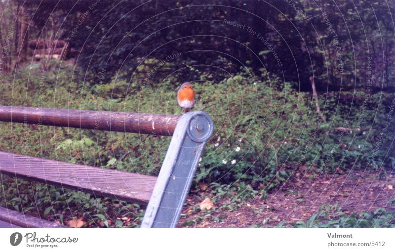Nature Animal Forest Bird Bench Robin redbreast