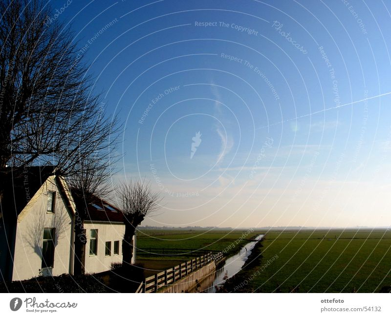 Sky Tree Winter House (Residential Structure) Cold Meadow Farm Pasture Brook Netherlands Plain