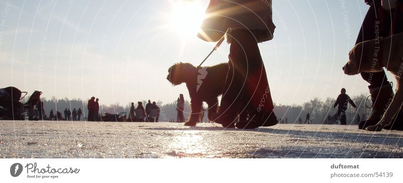 Sun Winter Cold Snow Dog Ice Legs Rope To go for a walk Leisure and hobbies Express train Ice-skates