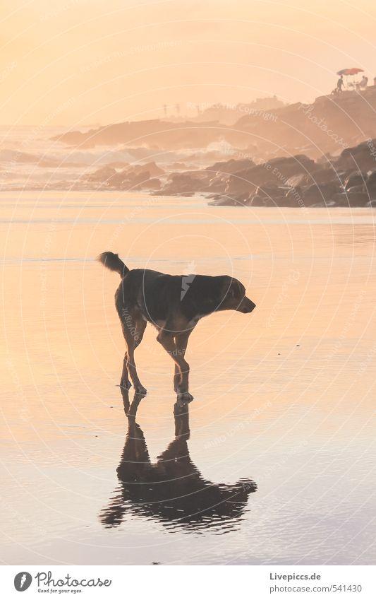 Dog Sky Nature Water Summer Sun Ocean Calm Animal Beach Environment Coast Going Rock Orange Waves
