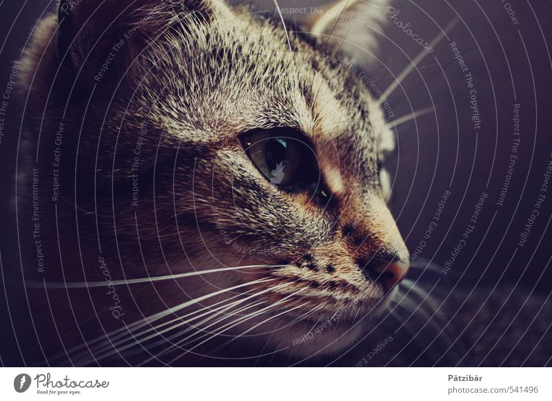 on the stalk Animal Pet Cat Animal face 1 Observe Discover Hunting Looking Brown Brave Domestic cat Subdued colour Animal portrait