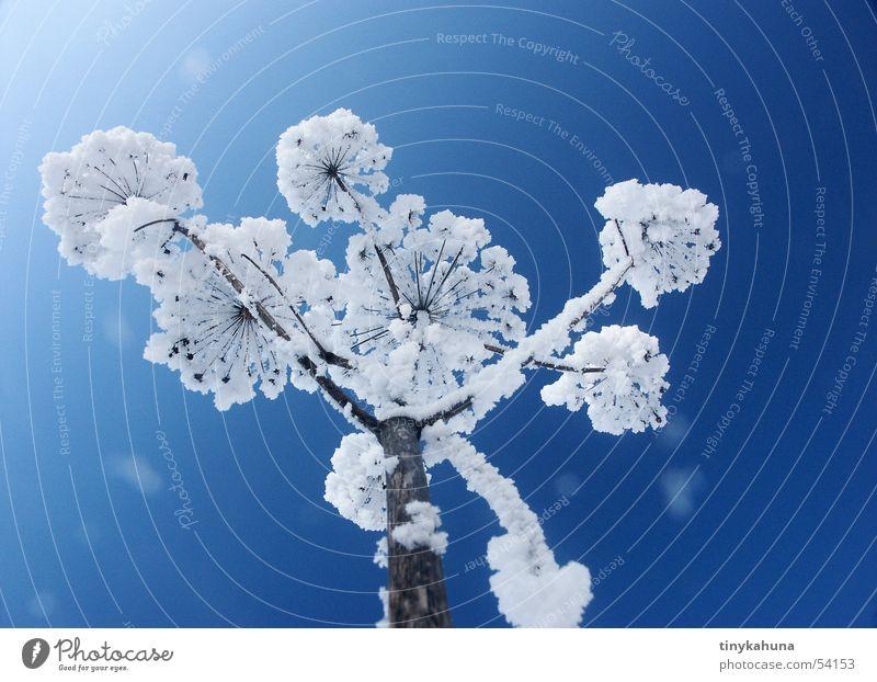 Beautiful Sky White Blue Snow Meadow Grass Bright Perspective Frost Open Clarity Frozen Upward Hoar frost Snowflake