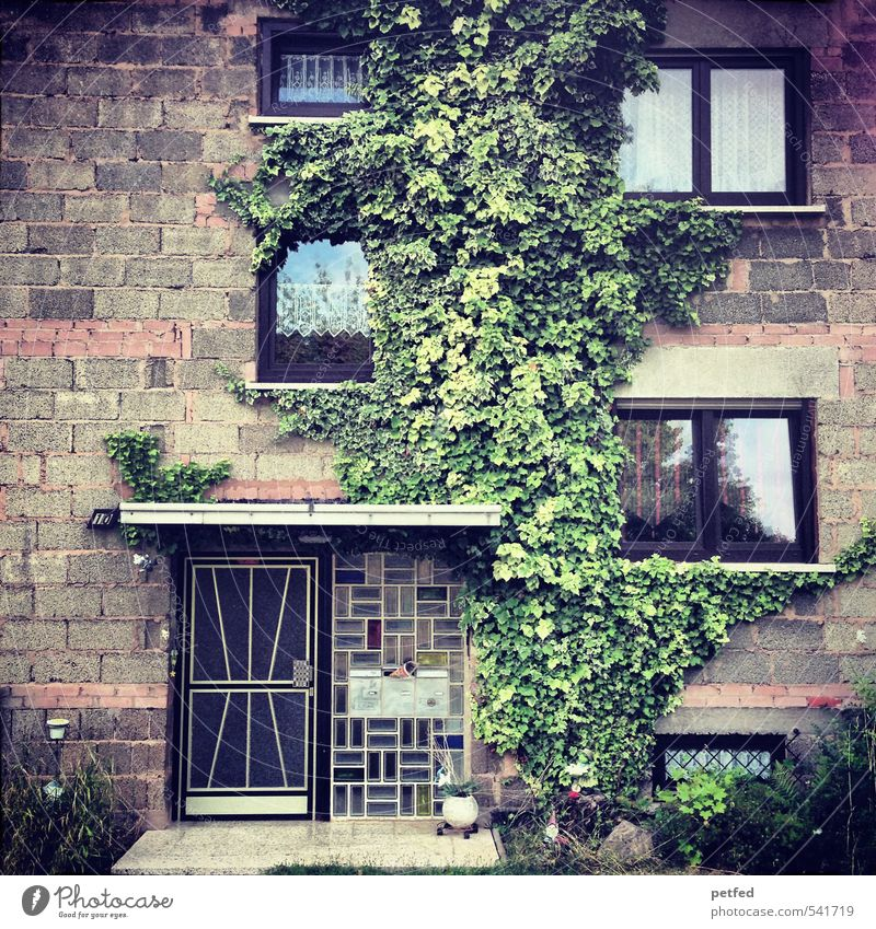 Domestic views IV House (Residential Structure) Curtain Architecture Seventies Ivy Facade Window Door Entrance Stone Simple Brown Green Safety (feeling of) SME