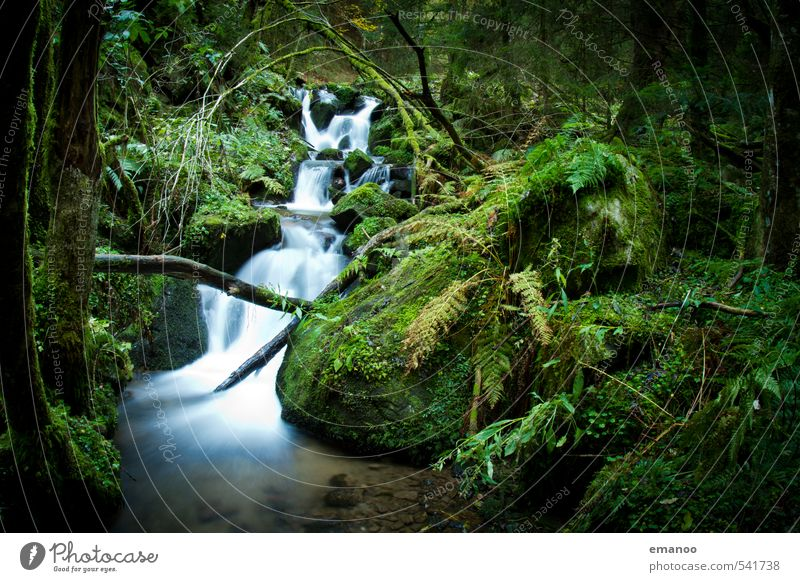 Black Forest brook Vacation & Travel Adventure Expedition Nature Landscape Plant Water Tree Bushes Moss Fern Foliage plant Mountain Canyon Brook River Waterfall