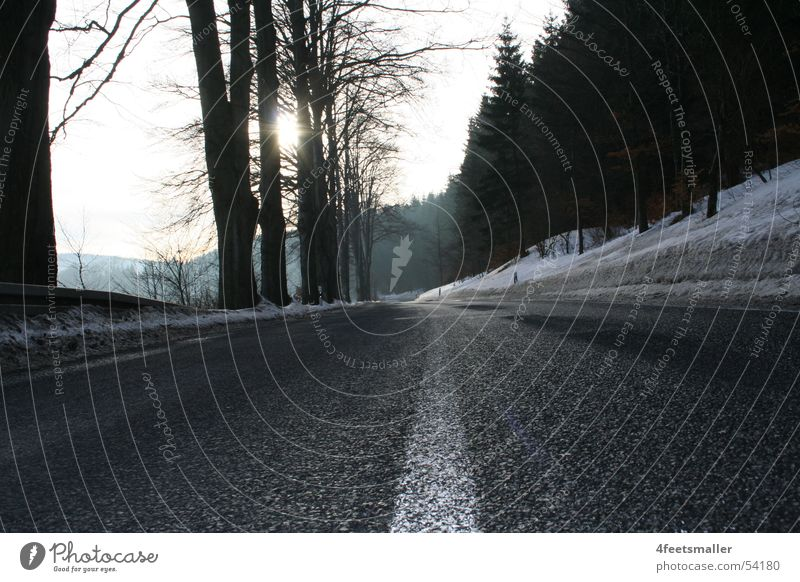 Way of Life Tree Thuringia Forest Street Sun Signs and labeling Snow Bread Node Shadow asphalt