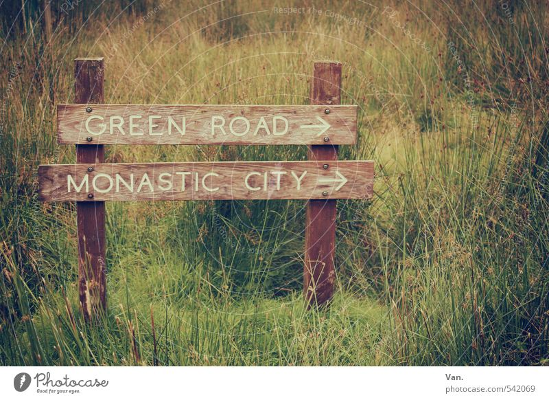 Green Road Nature Plant Grass Meadow Wood Yellow Signs and labeling Roadside calvery Colour photo Subdued colour Exterior shot Detail Deserted Day