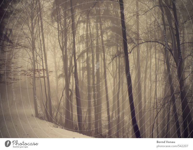 Nature Plant Tree Landscape Winter Black Forest Dark Environment Snow Lanes & trails Natural Brown Weather Fog Branch