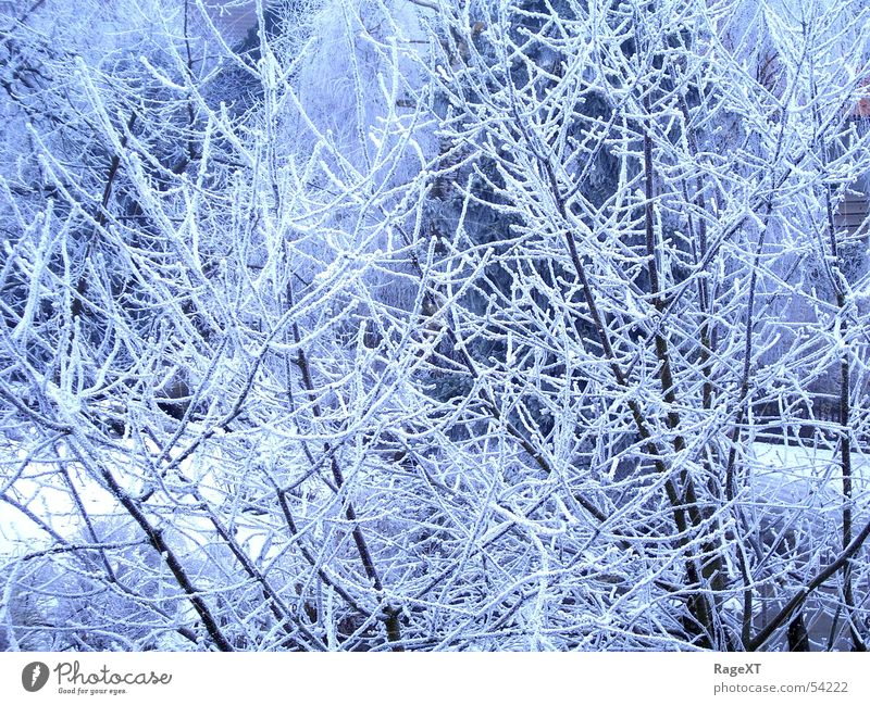 Blue Winter Cold Ice Bright Fresh Frost