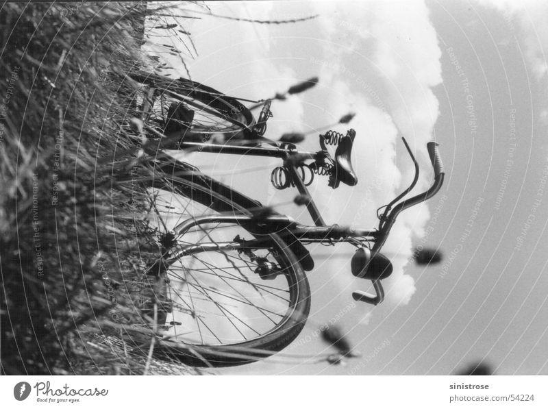 mei radl Bicycle Meadow Summer