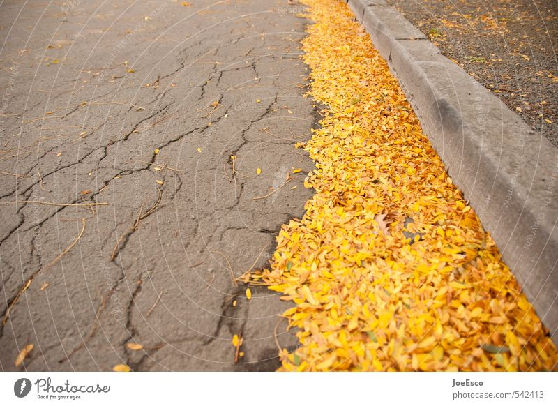 #542413 Autumn Town Yellow Gold Curbside Leaf Street cleaning Sweep Lamp Decline Seasons Arrangement Orderliness Colour photo Exterior shot Detail Deserted