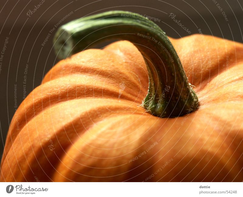 Halloween pumpkin Hallowe'en Autumn Public Holiday Thanksgiving Pumpkin Orange Vegetable Macro (Extreme close-up)