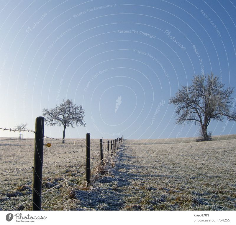 Separate Tree Meadow Winter Individual Fence Pasture fence Sky Blue sky Hoar frost Loneliness unattached