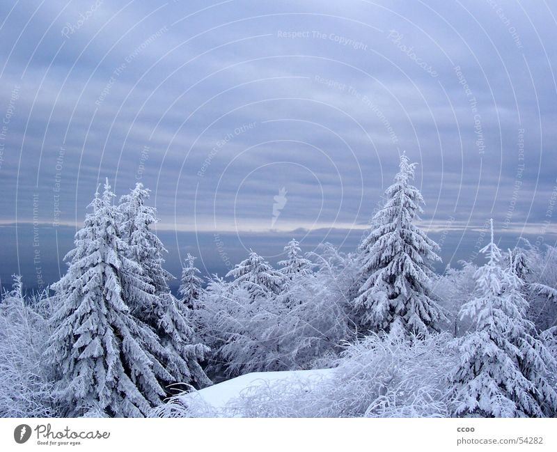 Sky Tree Winter Snow Mountain Fir tree Peak