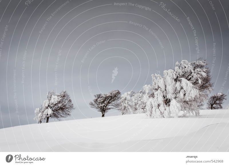 Sky Nature Vacation & Travel White Tree Landscape Clouds Winter Cold Environment Gray Moody Ice Climate Trip Adventure