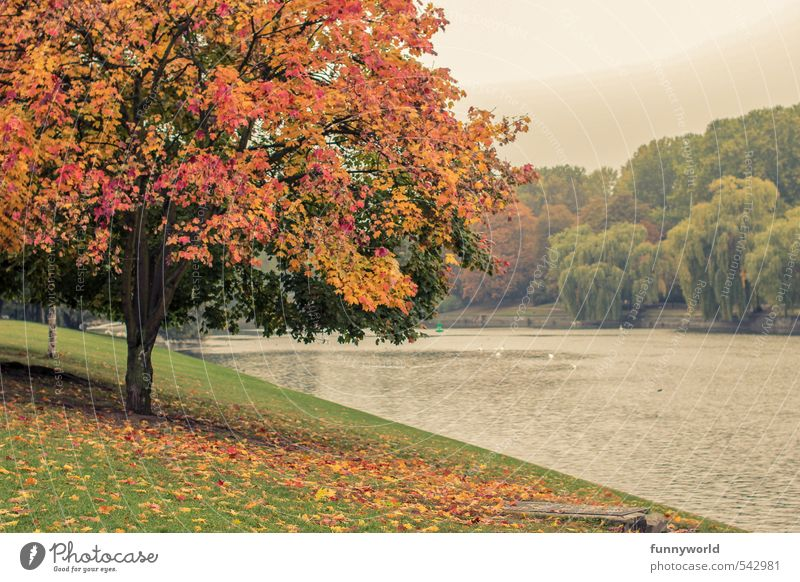 variegated Plant Tree Leaf Foliage plant Park Meadow Coast River bank Faded Friendliness Beautiful Multicoloured Happiness Optimism Power Senior citizen