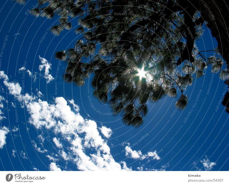 Sky Tree Sun Blue Clouds