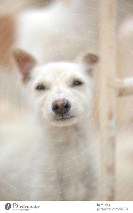 Animal Dog Nose Desert Africa Egypt