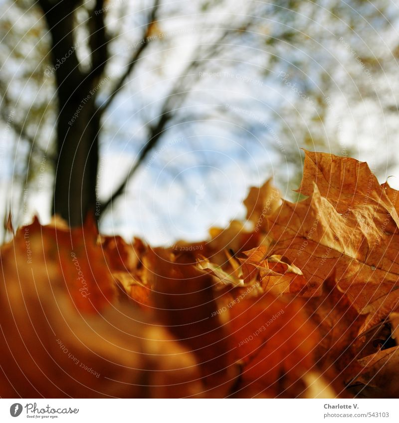 Nature Plant Tree Leaf Environment Autumn Death Wood Natural Bright Lie Brown Park Gold Climate Stand