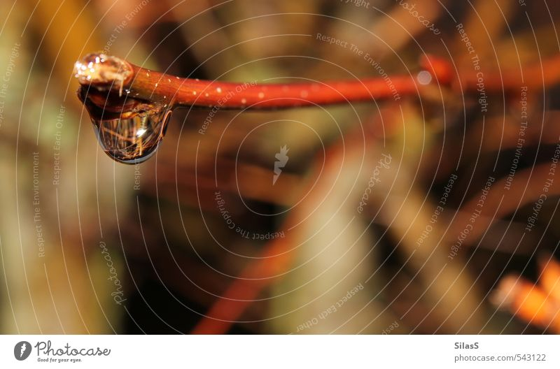rain Water Drops of water Weather Bad weather Rain Plant Twig Branch Brown Yellow Gold Green Red Ease Colour photo Exterior shot Day Blur