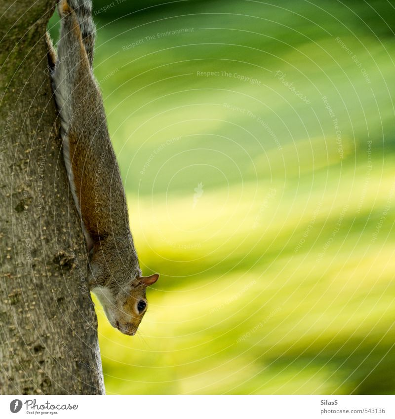 croissant bungee Nature Plant Squirrel 1 Animal Curiosity Cute Brown Yellow Gray Green Colour photo Exterior shot Day Animal portrait