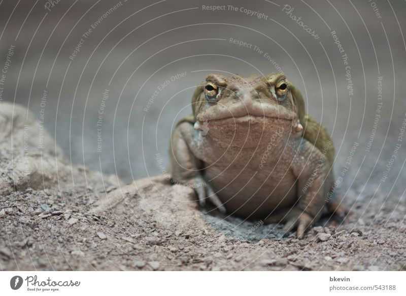 Beautiful Green Calm Animal Cold Sadness Gray Natural Wild animal Wait Cool (slang) Grief Zoo Fat Boredom Frog